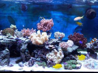 Forum di acquariofilia for Acquari marini offerte
